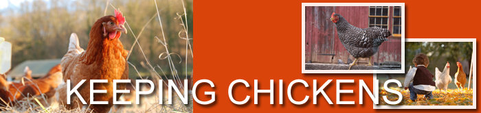 Raising Chickens Ezine