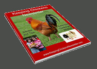 keeping chickens newsletter
