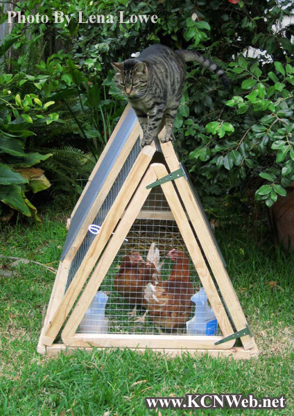 cat-on-poultry-ark