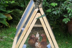 Cat on Poultry Ark