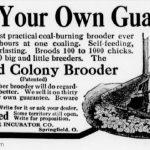 colony brooder