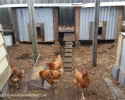 chicken coops in run