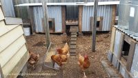 chicken coops in run